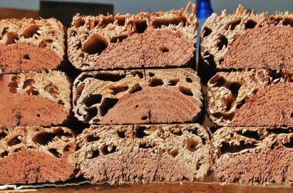 Termite ridden wood samples