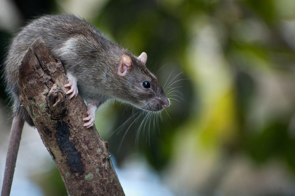 pest-control-in-new-zealand