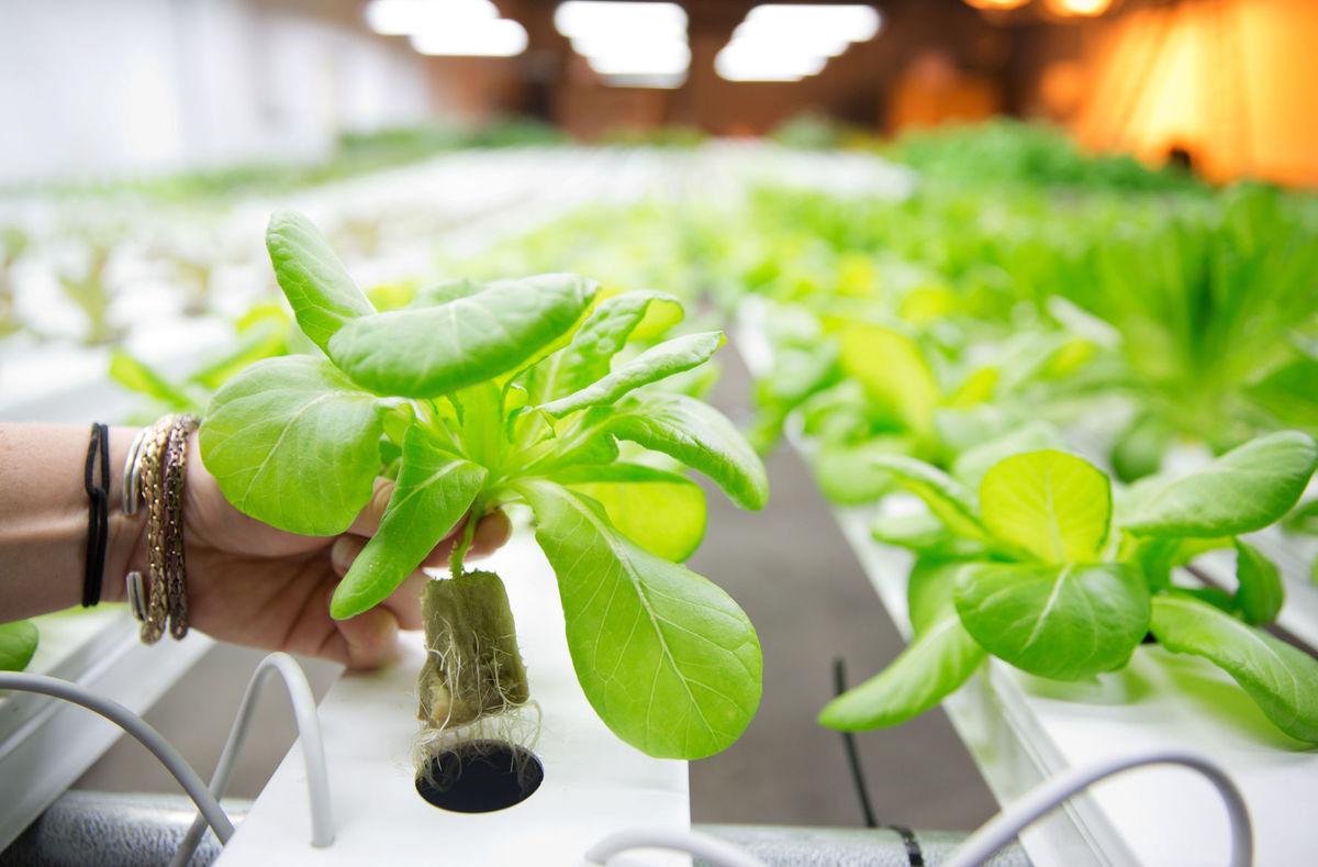 Hydroponic gardens at home and offices