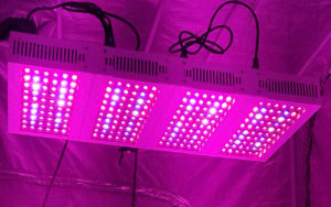 Grow lamps and modern agro tech
